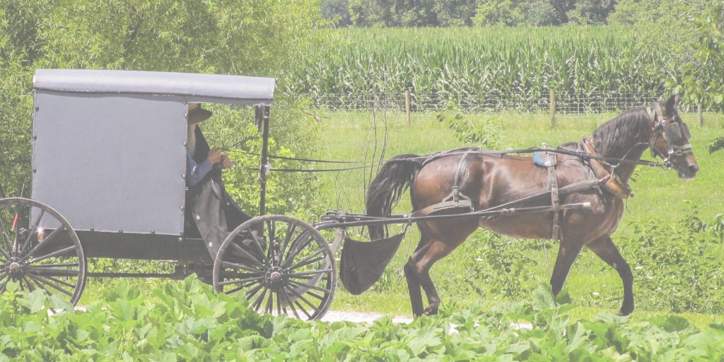 amish buggy on the road in the country