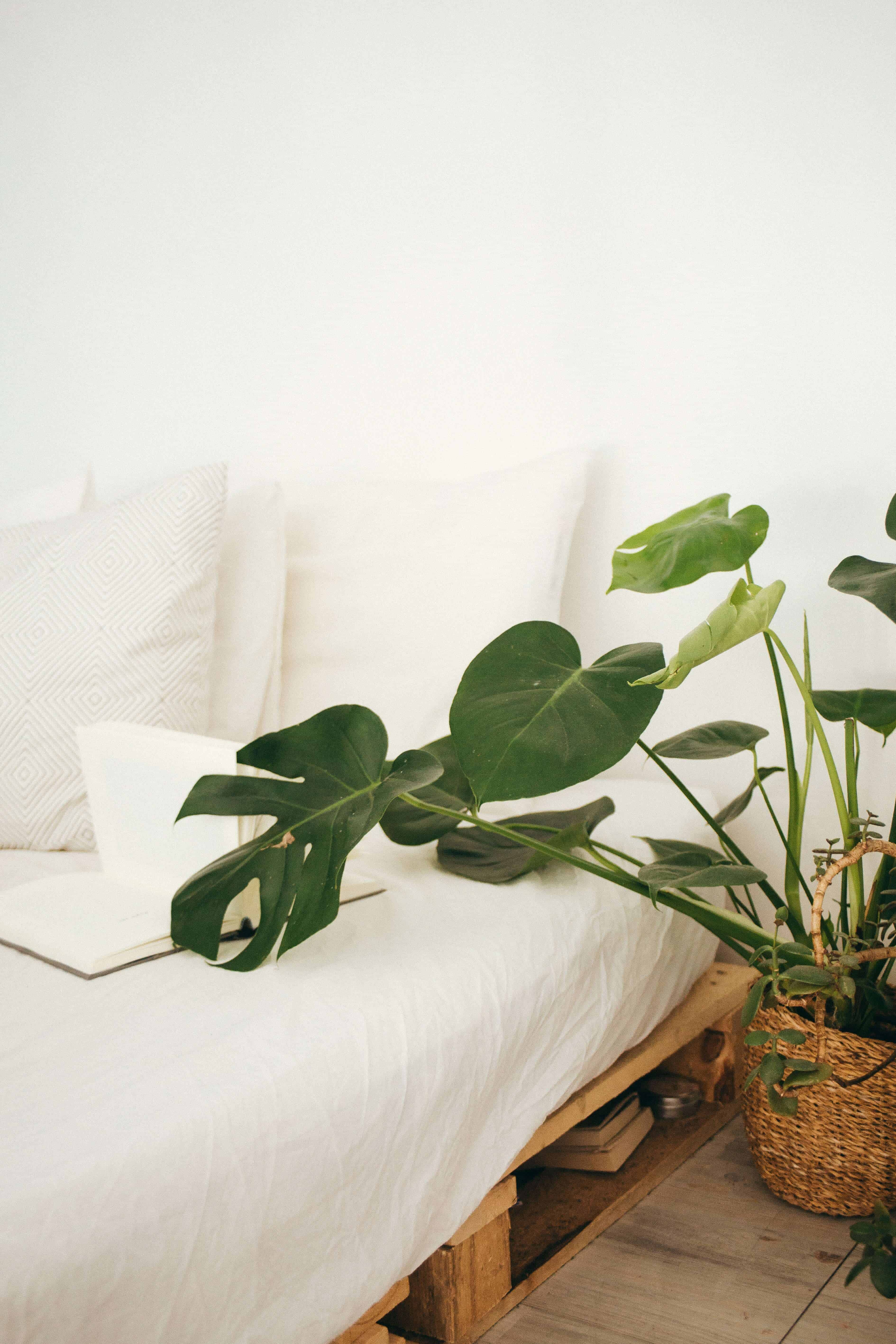 bed with white sheets, green plant on the side
