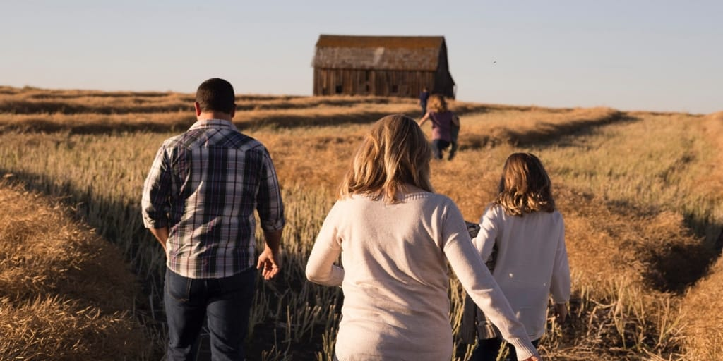 family all walking out into a field of barley towards a barn